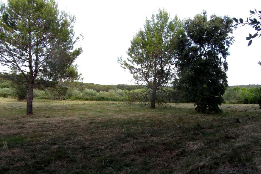 grand terrain constructible proche Montpellier